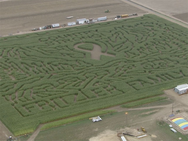 Copter4 flew over the Fritzler corn maze in LaSalle on Sept. 14, 2011. (credit: CBS)
