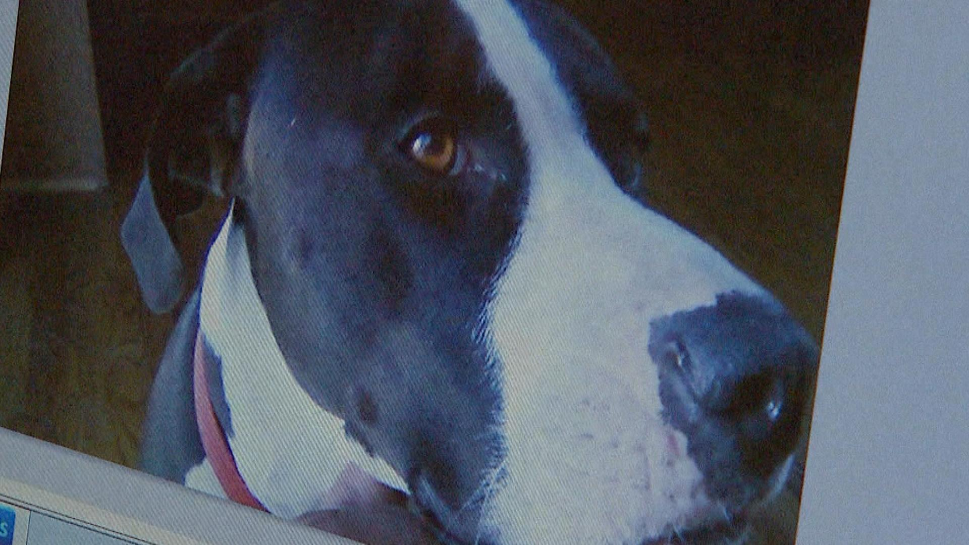 Chloe was shot to death by a Commerce City police officer in November of 2012 (credit: CBS)