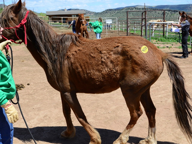 A rescued horse in Jefferson County (credit: Jefferson County Sheriff's Office)