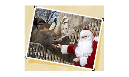 Santa feeds Mshindi in this file photo found on the Denver Zoo's website (credit: Denver Zoo)