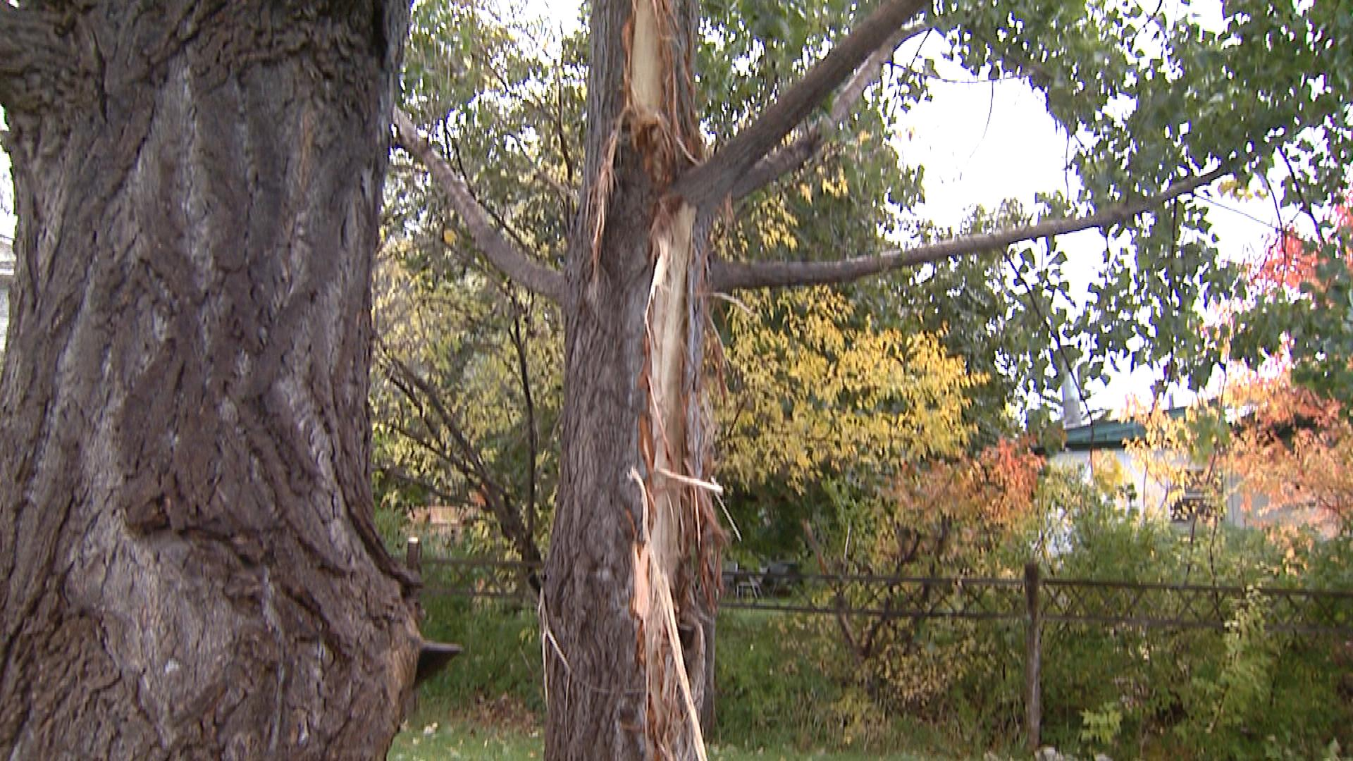 A tree struck by lightning behind Charlie Bennet's home (credit: CBS)