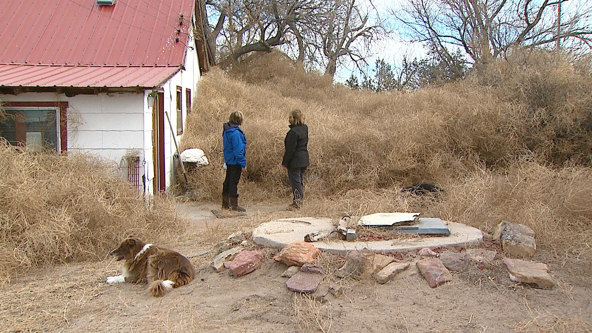 Kelly Myers shows CBS4's Suzanne McCarroll the tumbleweeds taking over her property (credit: CBS)