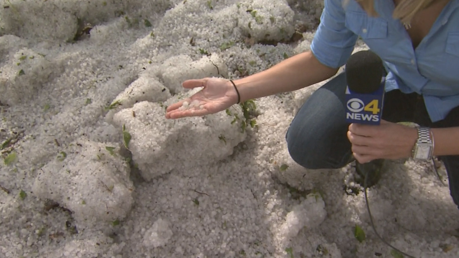 CBS4's Kelly Werthmann in piles of hail in the Park Hill neighborhood (credit: CBS)
