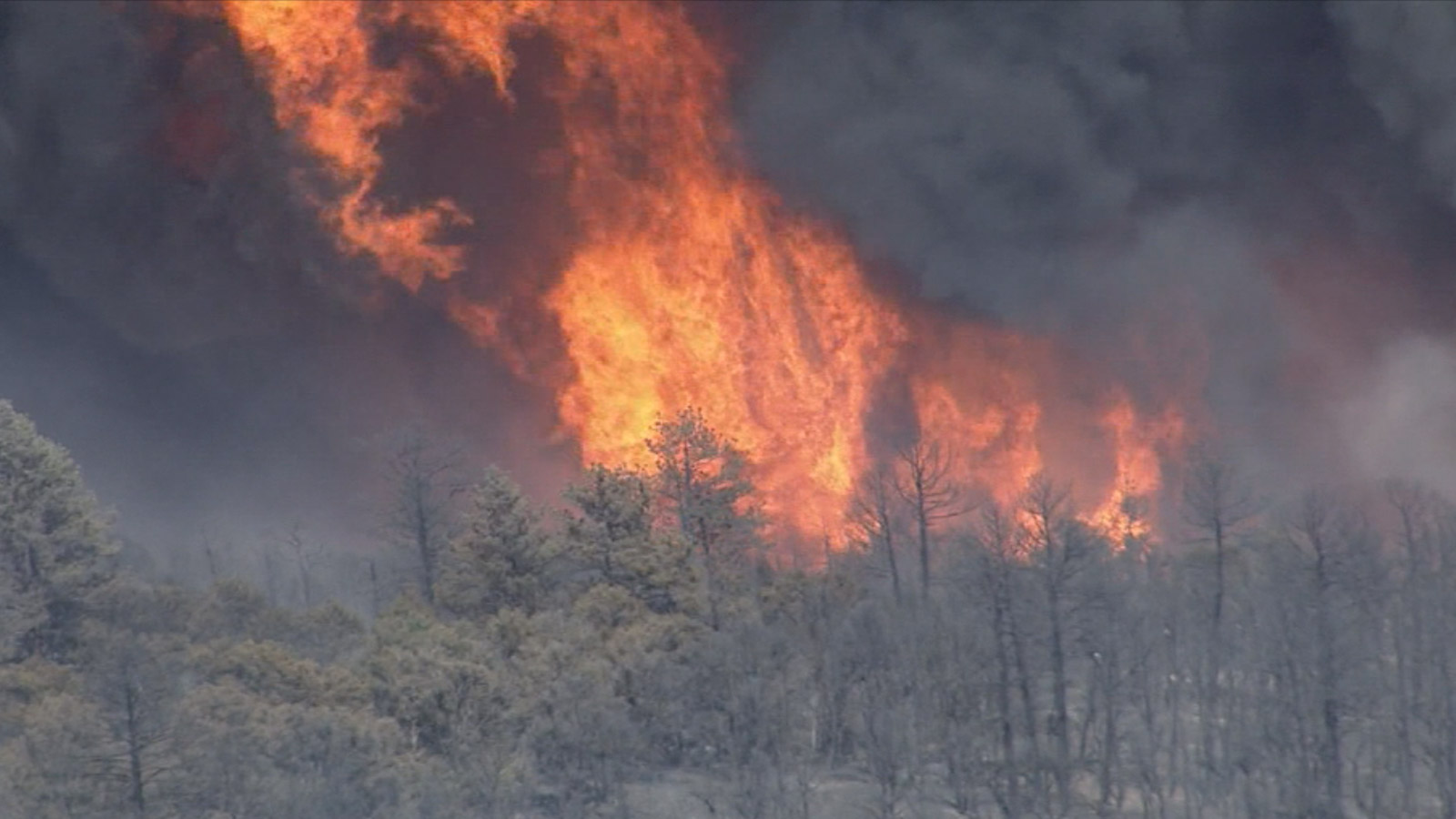 Copter4 flew over the Eightmile Fire burning near Canon City (credit: CBS)