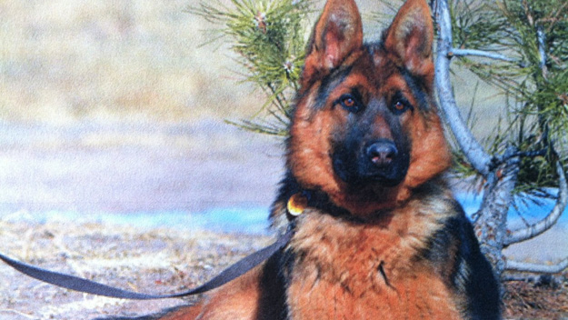 One of the missing dogs (credit: Douglas County Sheriff's Office)