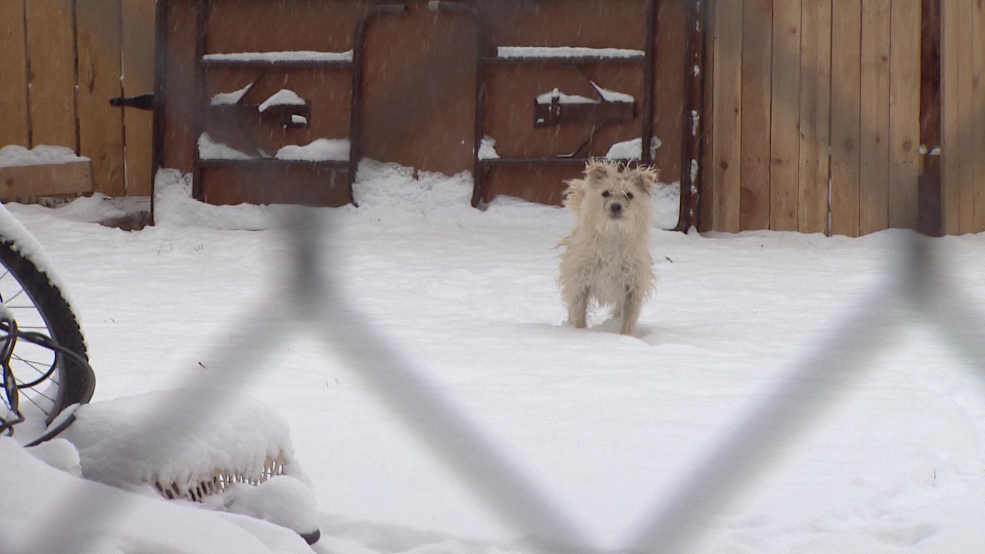 A dog out in the cold on Wednesday (credit: CBS)