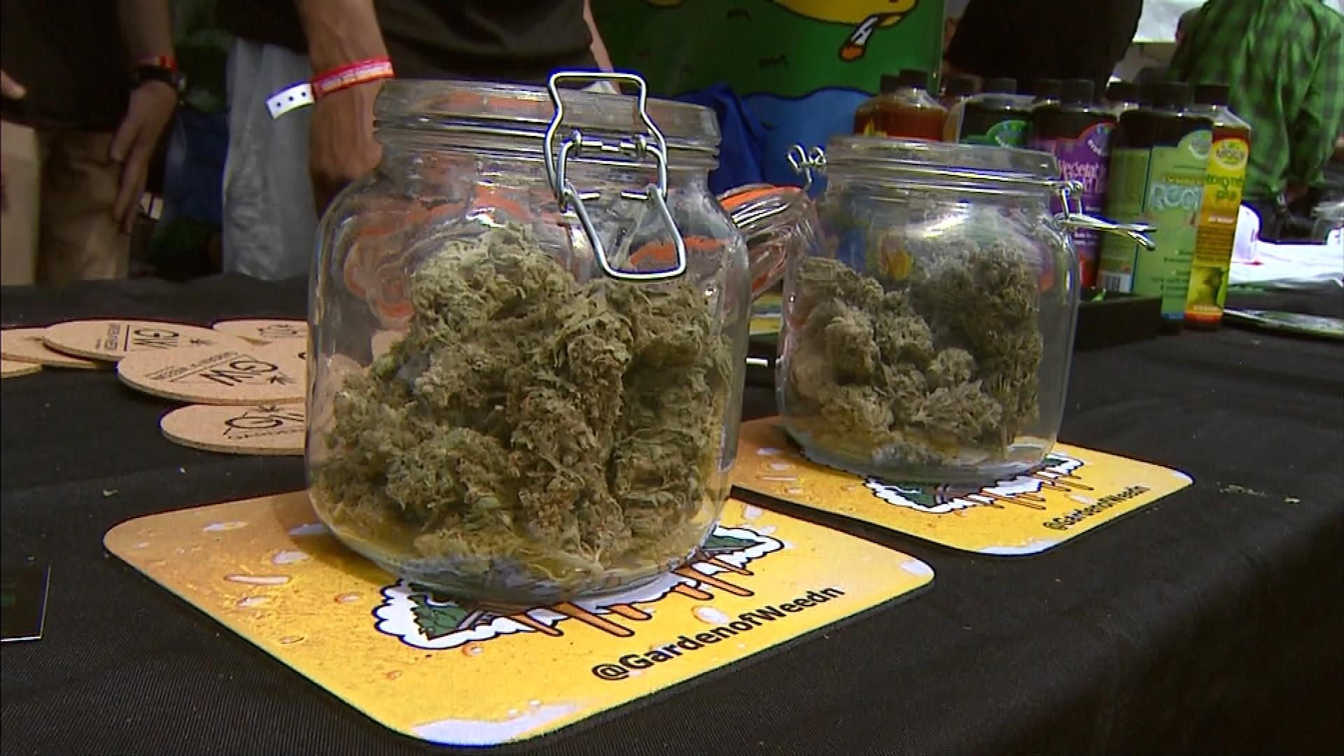 Pot at the Cannabis Cup (credit: CBS)