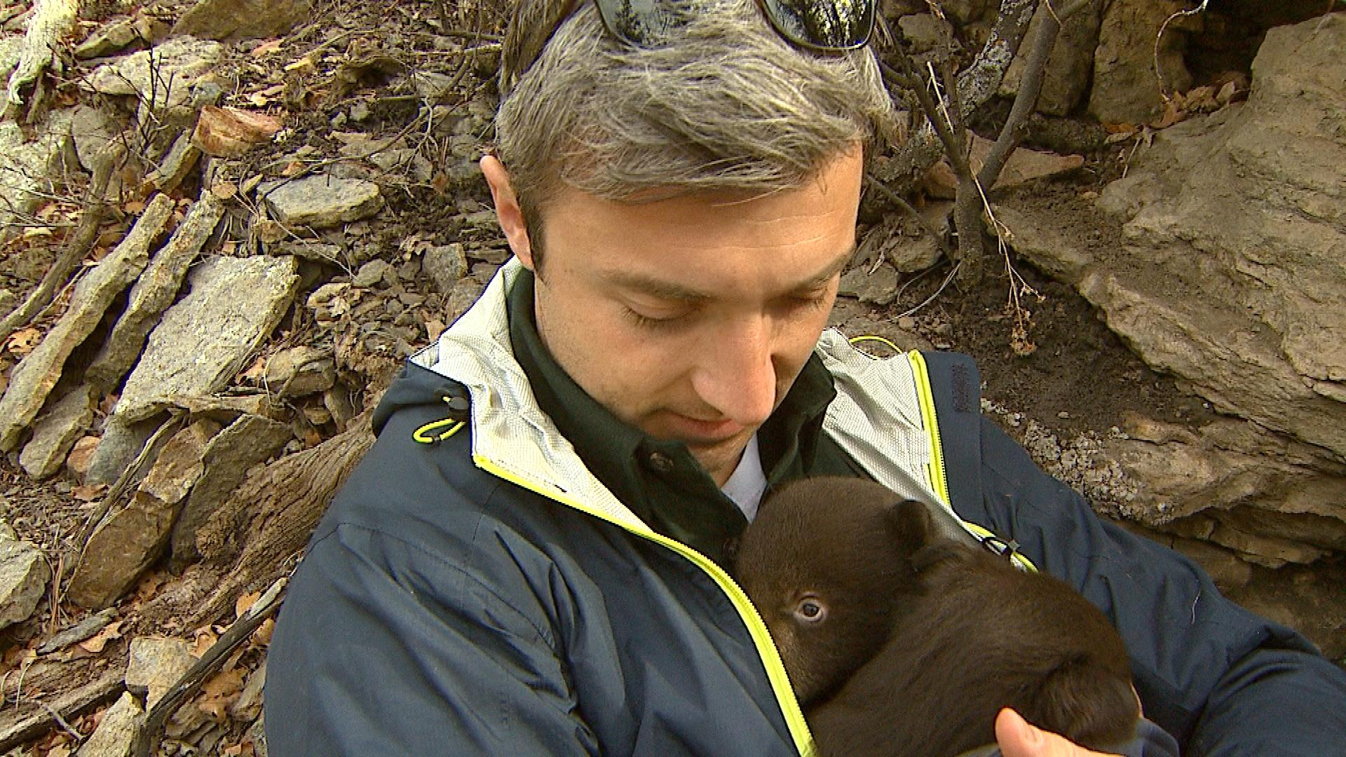 CBS4's Stan Bush holds a black bear cub in the study (credit: CBS)