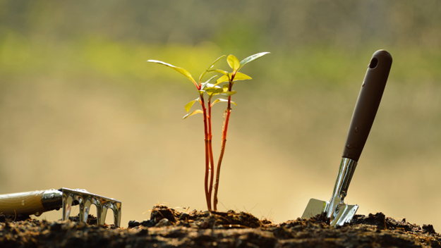 Planting (Photo Credit: Thinkstock)
