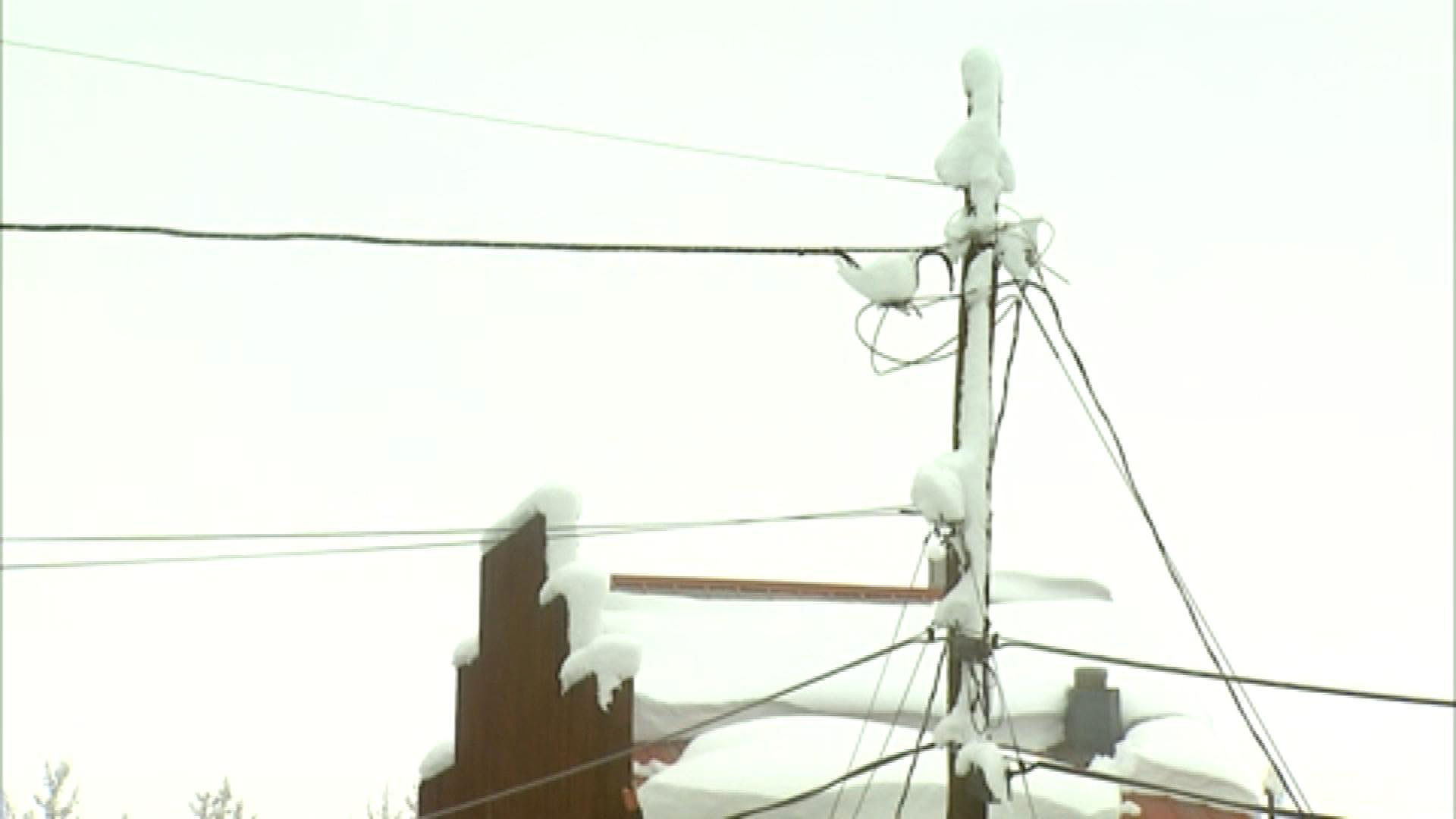 Power lines in Fairplay on Tuesday (credit: CBS)