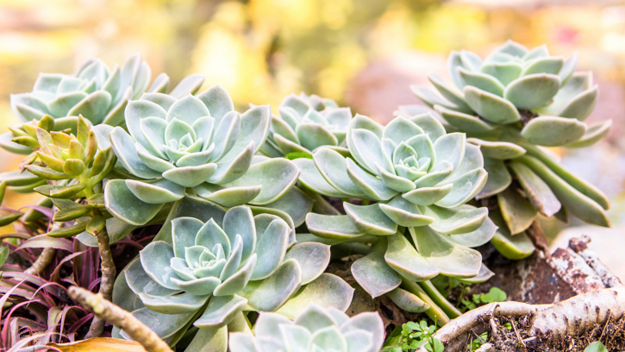 Succulent Plants (Photo Credit: Thinkstock)
