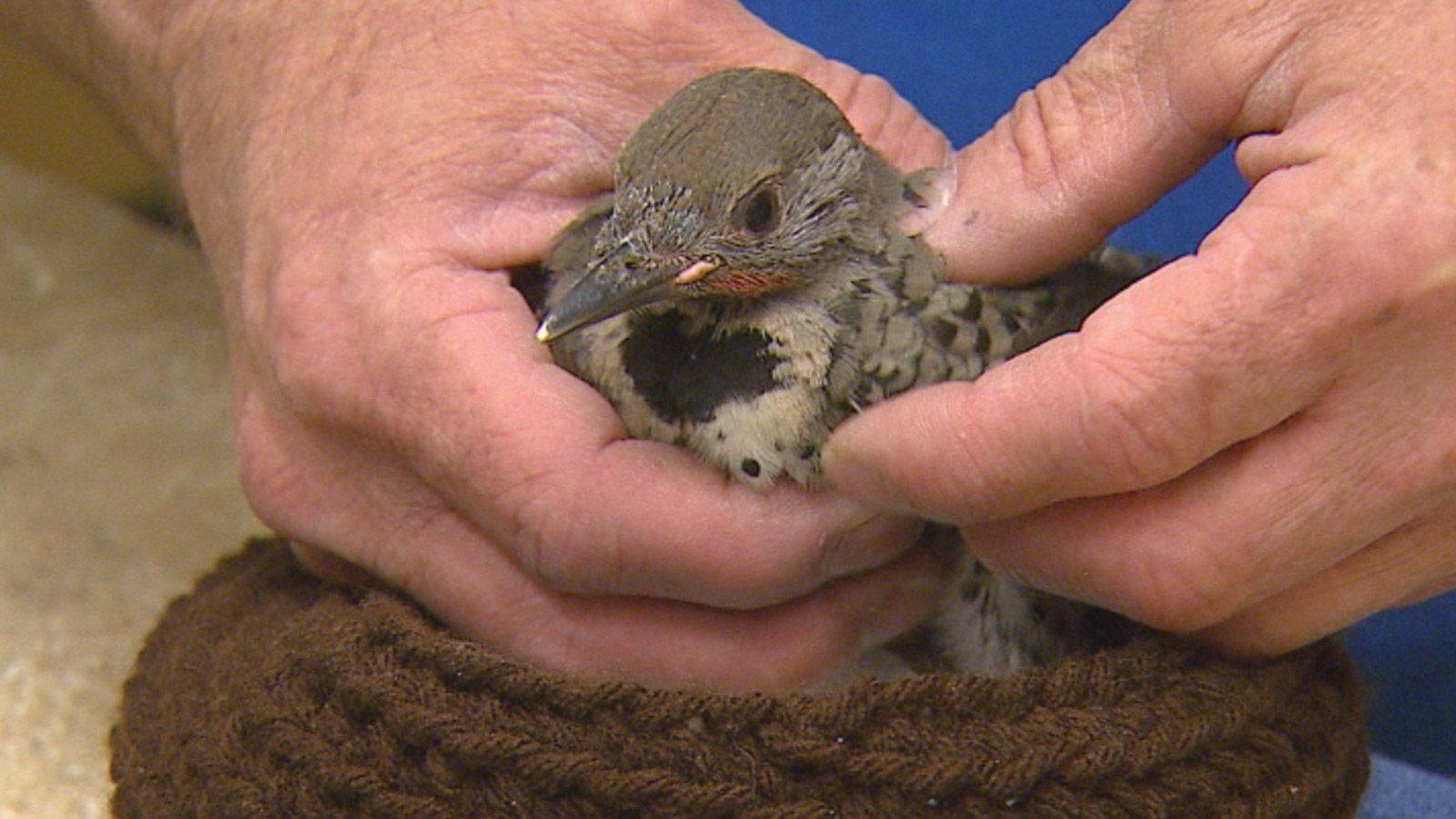 A bird at the Greenwood Wildlife Rehabilitation Center (credit: CBS)