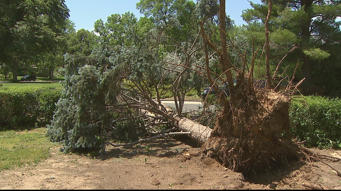 A downed tree after Wednesday's storms (credit: CBS)