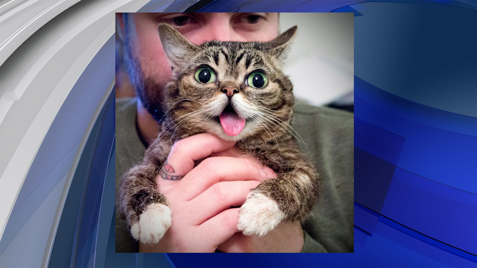 Lil BUB will be featured at the Kitten Pavilion (credit: Denver County Fair)