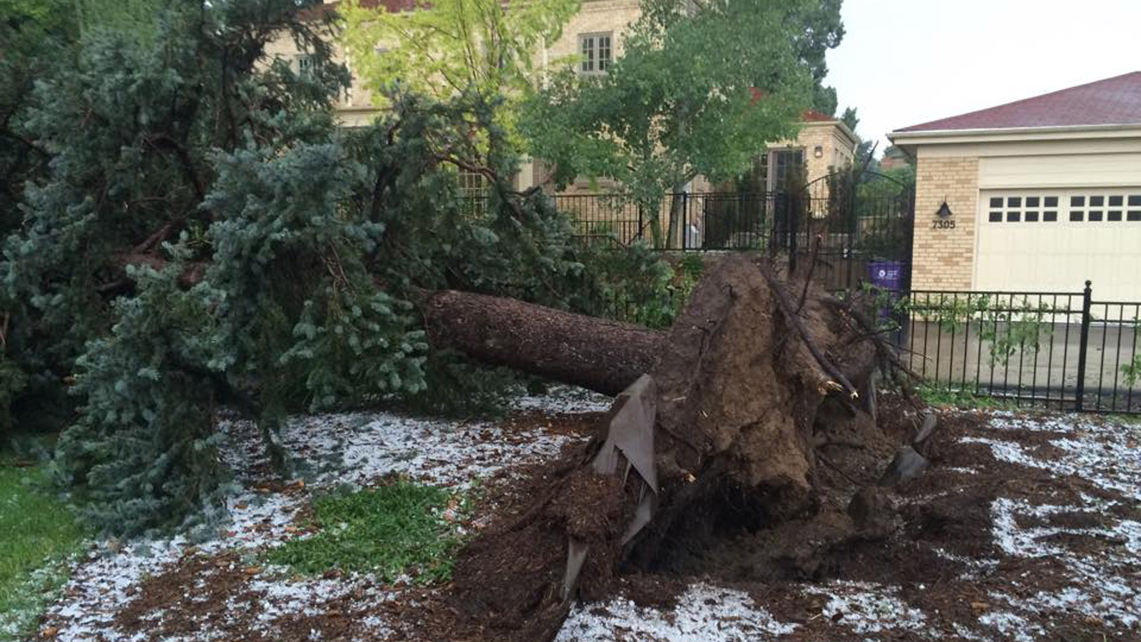 John Danni in Lowry sent in this picture of a downed tree (credit: John Danni)
