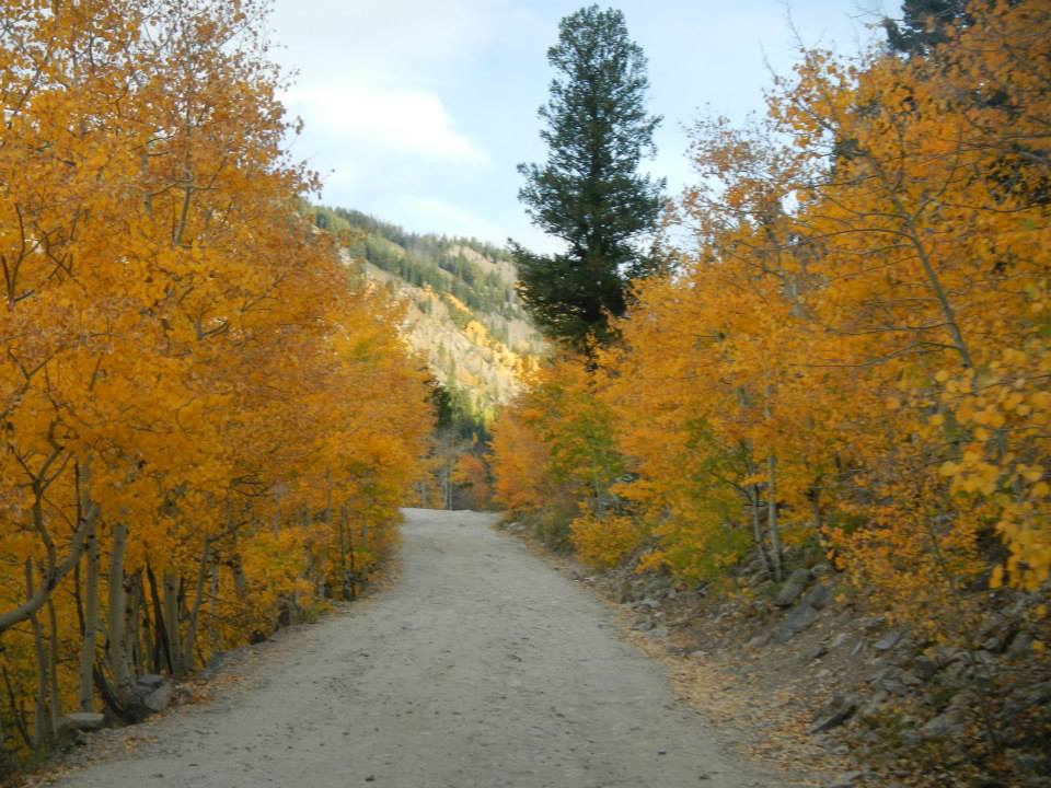 Beautiful foliage west of Nederland during the fall of 2014 on the way to Lake Dorothy. (credit: CBS4's Jason Hussong)