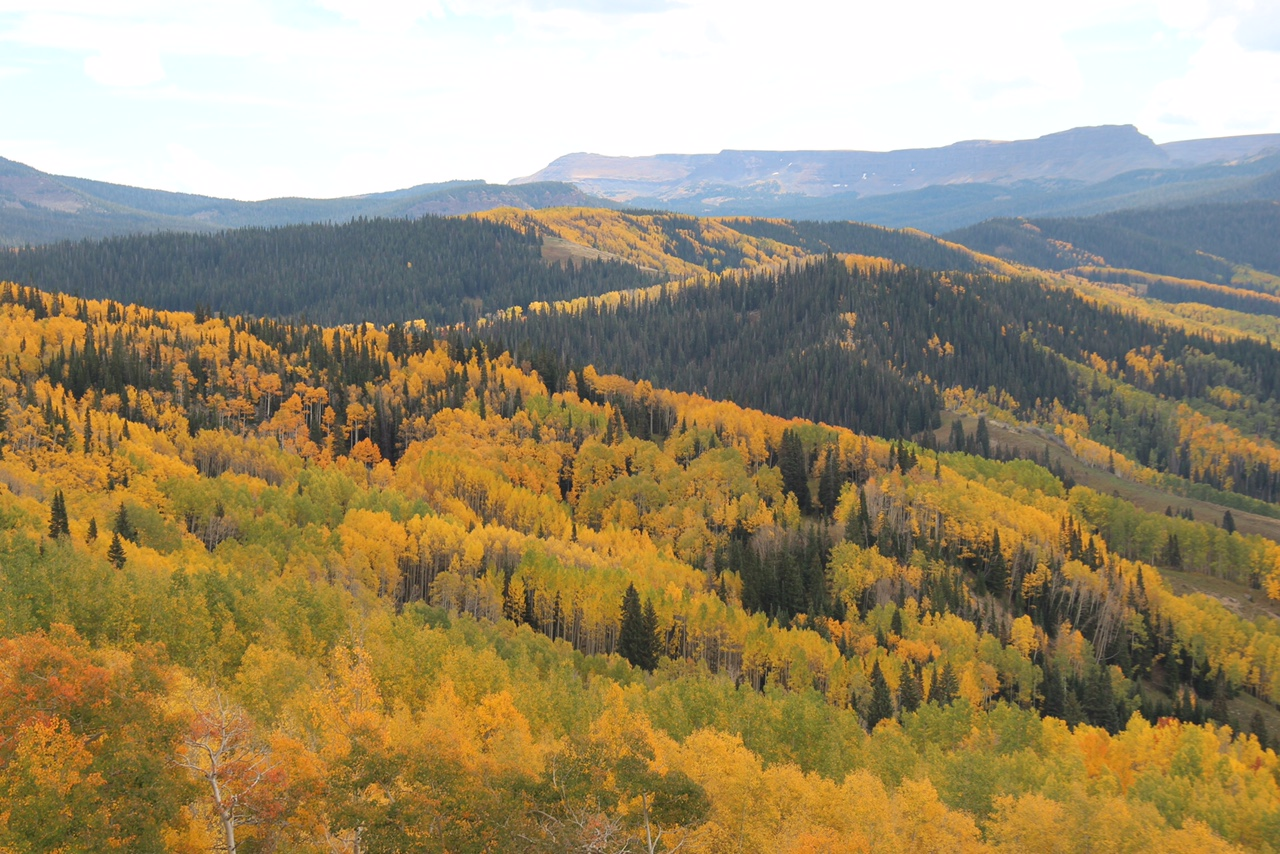 Fall color as far as the eye can see in 2014 as seen from the top of Dunkley Pass in Northwest Colorado. (credit: CBS4's Jeff Todd)