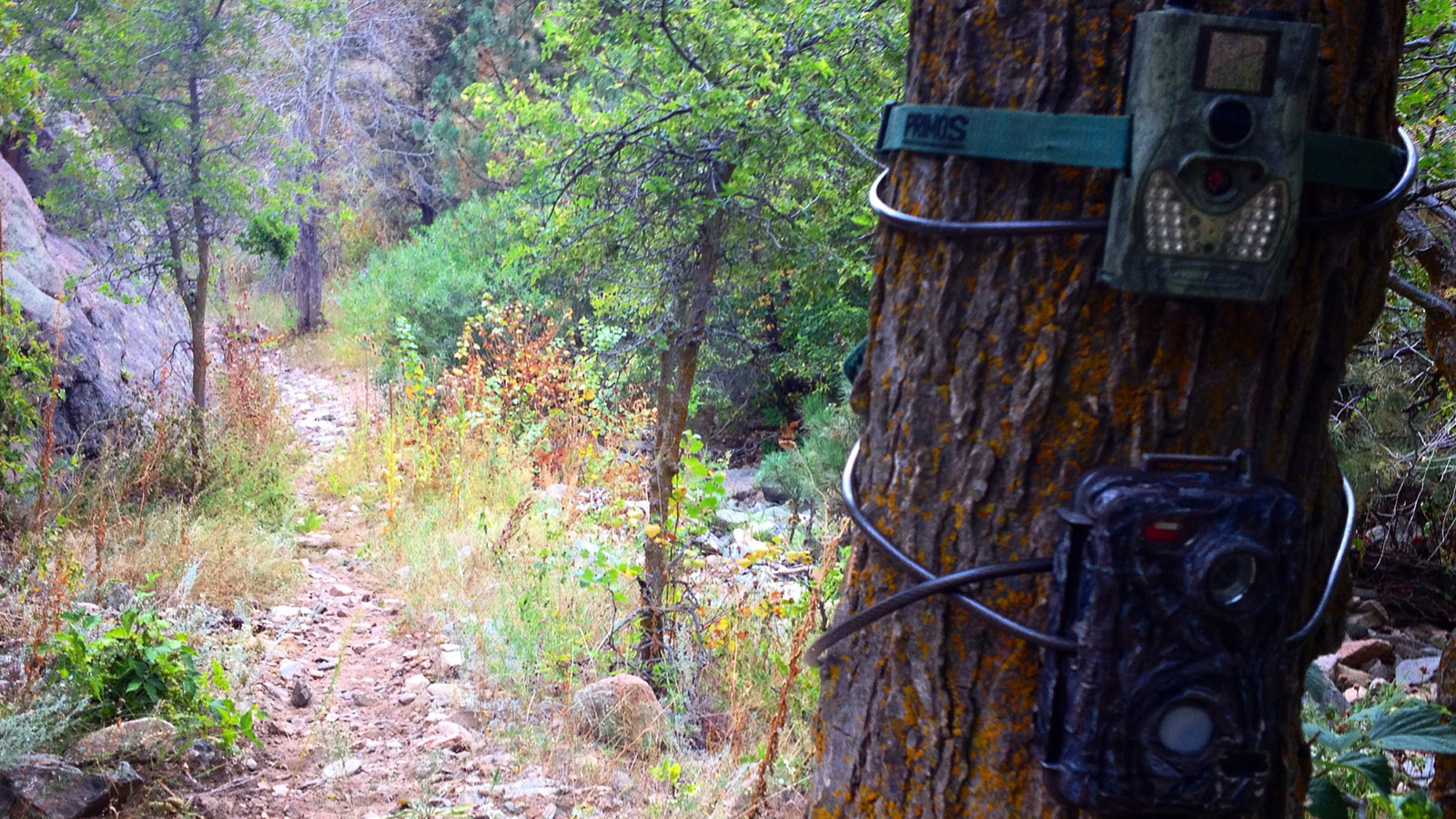 camouflaged wildlife camera mounted to tree (credit: CBS)