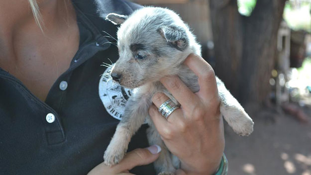 One of the rescued puppies  (credit: Fremont County Sheriff's Office)