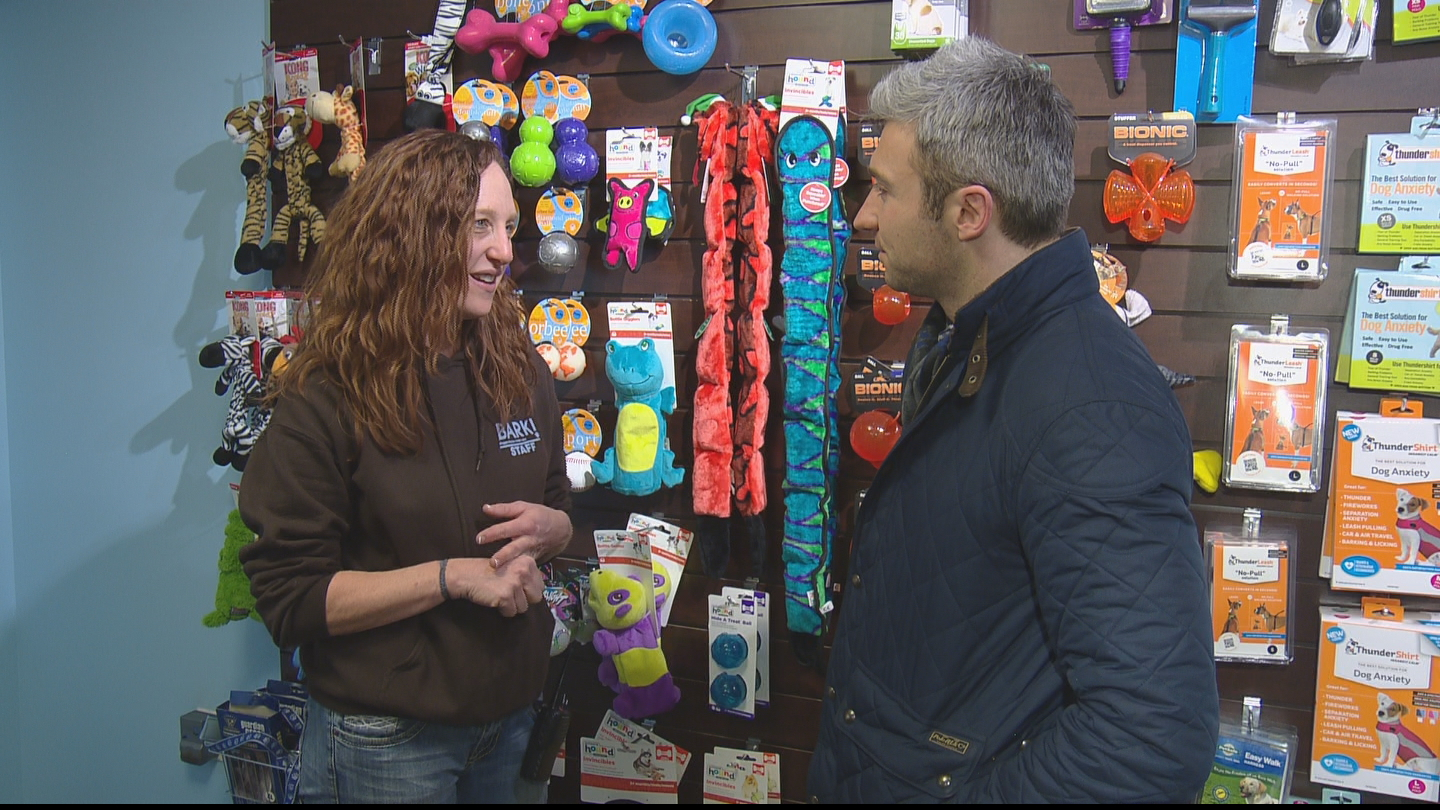 CBS4's Stan Bush interviews Melissa Babich, owner of BARK! (credit: CBS)