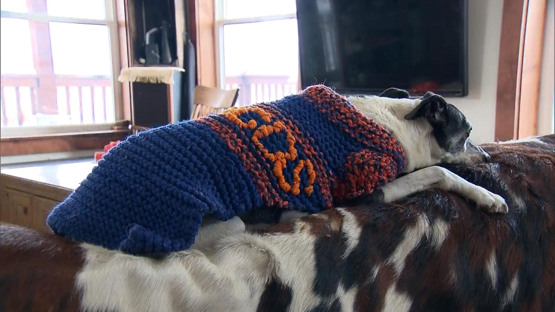 One of the Herbergs' dogs in a Broncos sweater (credit: CBS)