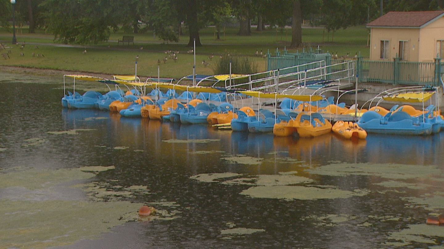 Algae grows in the pond at City Park (credit: CBS)