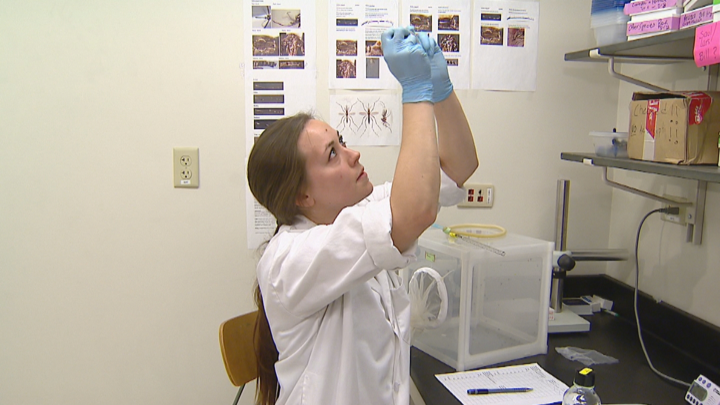 CSU researcher Ashley Janich (credit: CBS)