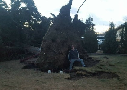 A downed tree in Colorado Springs (credit: Becca Justice)