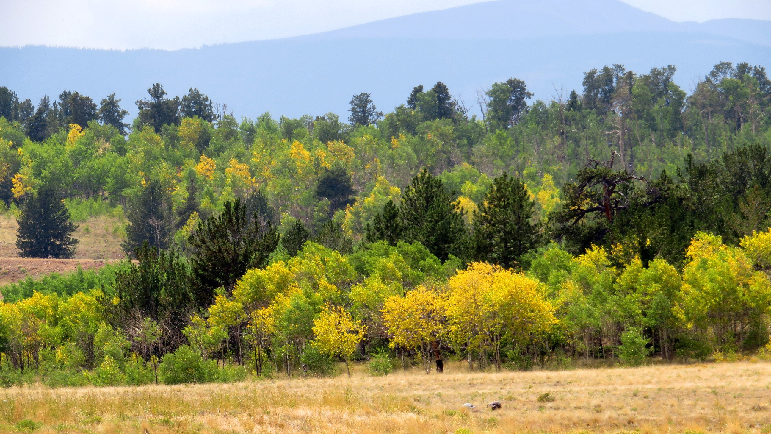 Fall Color At Kenosha Pass